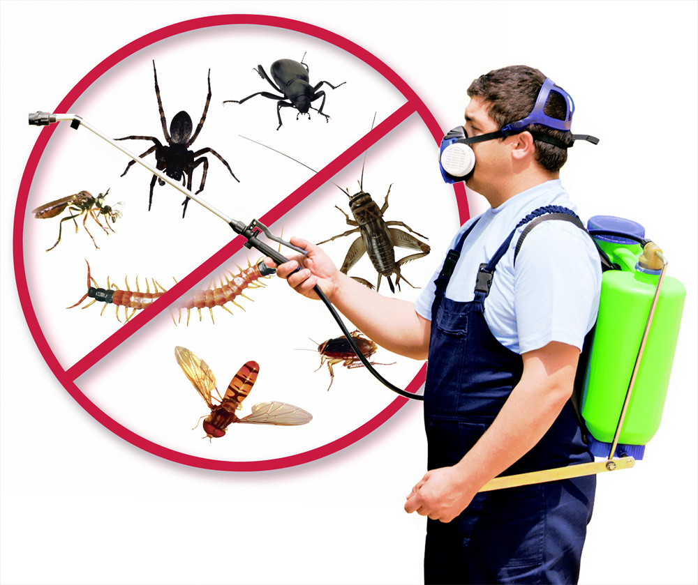 Salem pest management