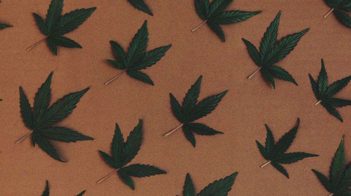 cannabis uses
