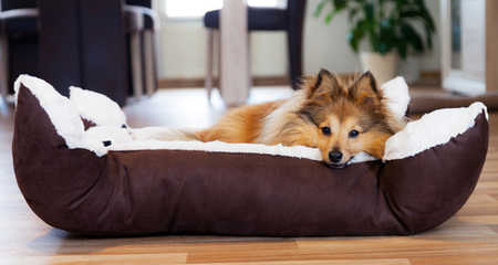 Things to consider while choosing a woven dog bed