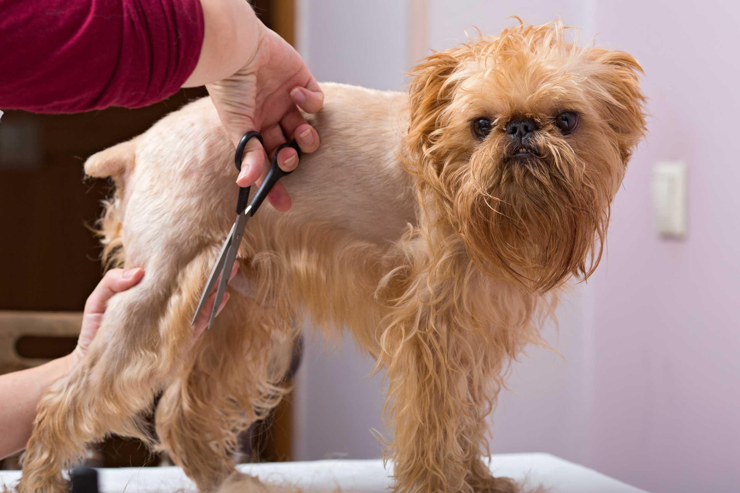 mobile pet grooming davie fl